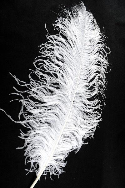 Plume d'autruche! env. 50 cm, premium, 1 pc ! blanc