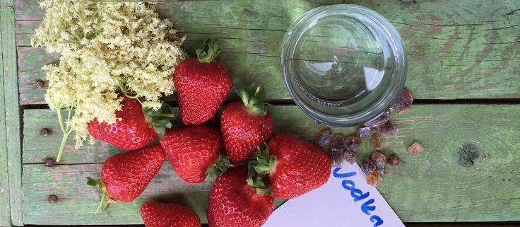 Eperrel és bodzavirággal finom likőrt is készíthetünk. A saját készítésű ital a nyári partik meglepetése lehet. Szép üvegbe töltve ajándéknak is kiváló.