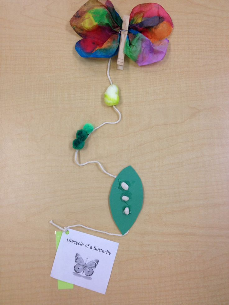 Life cycle of a butterfly craft