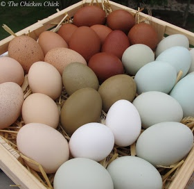 The Chicken Chick: Decrease in Egg Production: Causes & Solutions