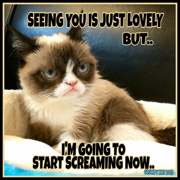 1401 Best Grumpy Cat Images On Pinterest Cat Memes