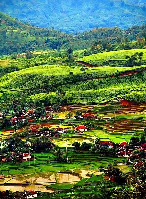 Pucak Bogor, West Java - Indonesia