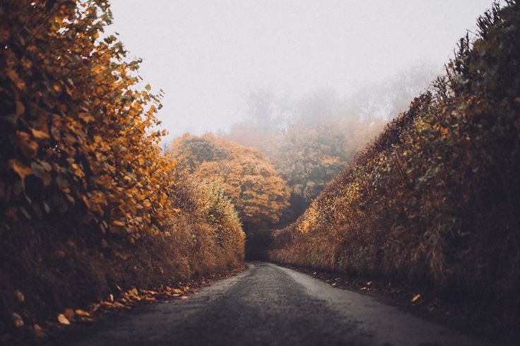 [#HD Wallpaper] Autumn-colored hedges on the sides of a narrow dirt road - #Photograph #Autumn #Photography #Wall Pixabay, Art, Love, Autumn leaf color  - Photo by Will Fuller @wfuller (unsplash)  - Follow #extremegentleman for more pics like this!