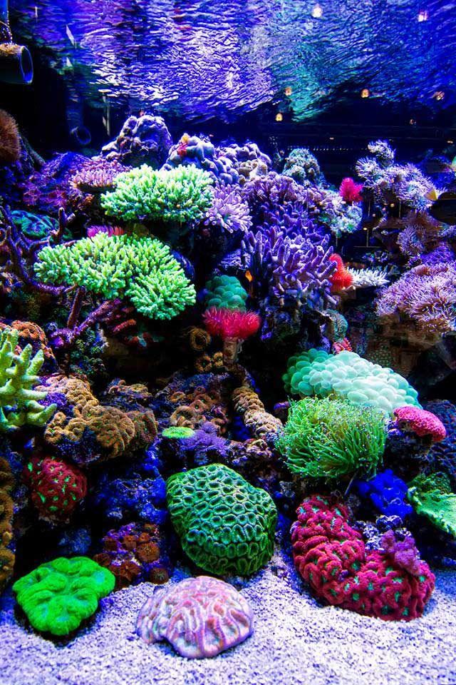 Zoutwater aquarium - Door levendsteen stevig te stapelen kan men aardige rif wanden samenstellen die u later kunt aankleden met soft of lederkoralen.