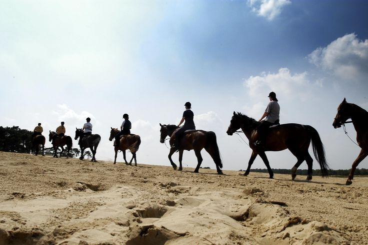 Dit is een geweldige manege Loon op Zand. De paarden worden s'morgens uit de wei gehaald. Ze staan dus lekker veel buiten!