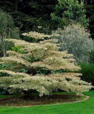 http://www.coach-silence-ca-pousse.fr/pas-de-panique-pour-choisir-vos-plantes/categorie/arbres.html?dir=n.asc