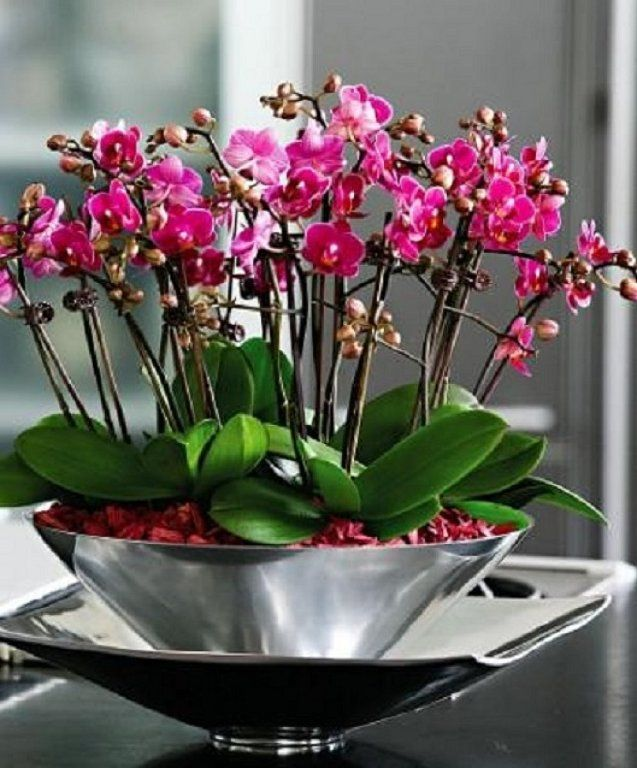 Good idea to put a few orchid plants together in a bowl- type pot.