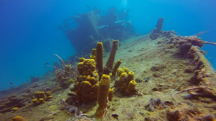 On the wreck of the CE Trek in Carlisle Bay, #Barbados