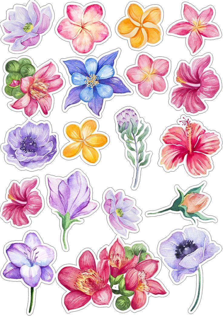 Картинки цветные цветы для вырезания