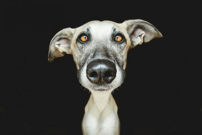 Игривые собачьи портреты