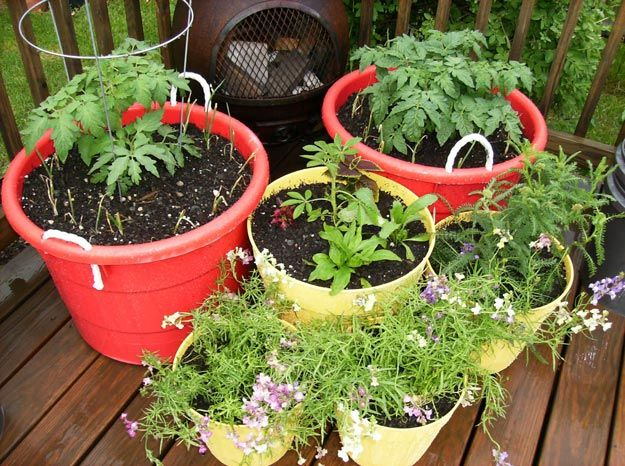 15 practical gardening ideas on a budget