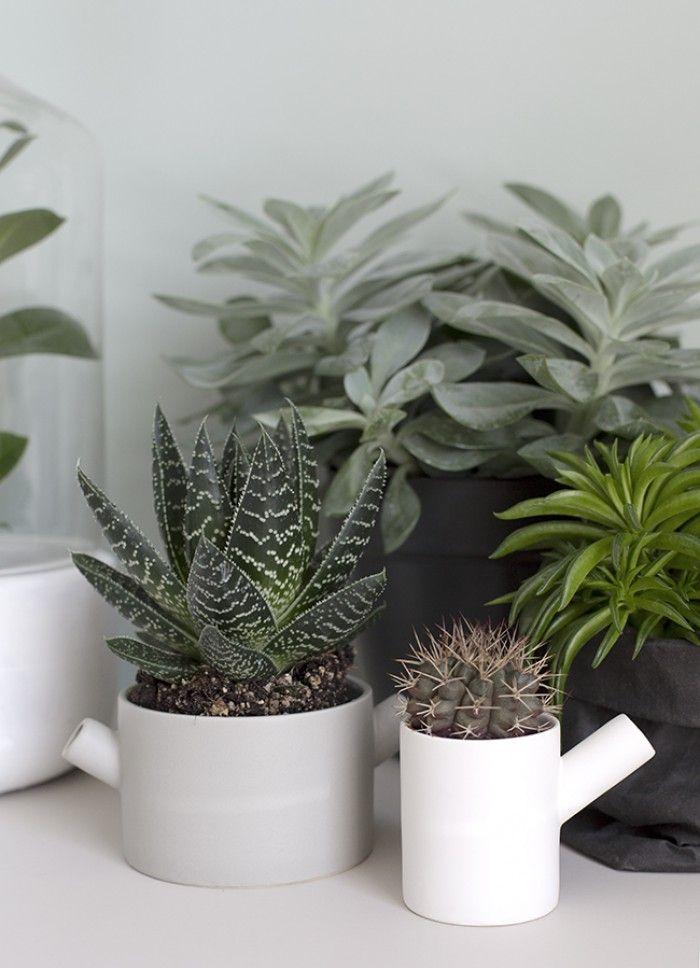 Succulenten en cactussen; mooie combinatie van matte kleuren (grijs/wit/groen), kleur op de muur Early Dew [styling & fotgrafie: Wendy van Woudenberg, beeldsteil com].