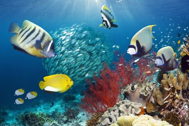 8 Underappreciated Sea CreaturesUnderappreciated Sea, Coral Reef, Amazing Marines, Sea Creatures, Marines Animal, Marines Biology, Bizarre Beautiful, Beautiful Tra, Barriera Corallina