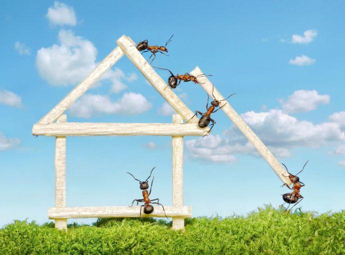 come-combattere-le-formiche-rimedi-naturali (2)