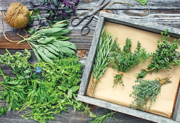 Culinary and Medicinal Herbs,Herb Gardens and Aromatherapy,Landscape Garden Designs,Varieties of Herb Garden
