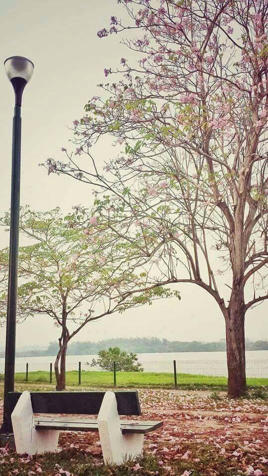 Hermosa fotografía en la Laguna del Carpintero