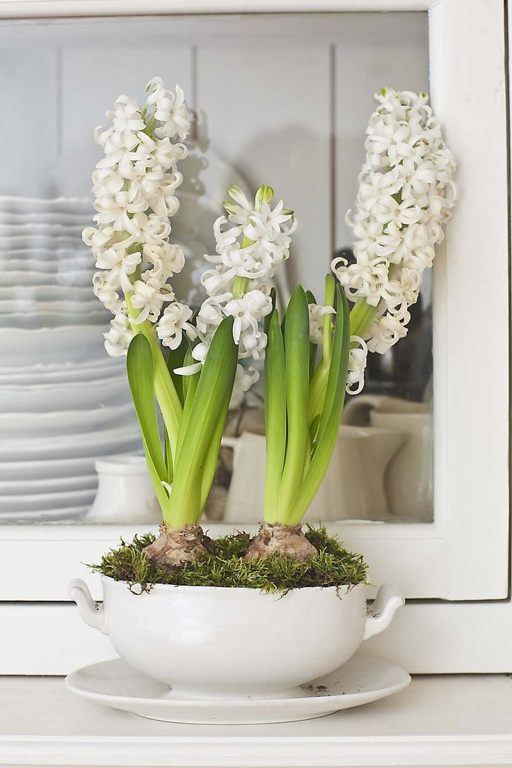 37 hyacinths dcor ideas to breathe spring in home decor pin