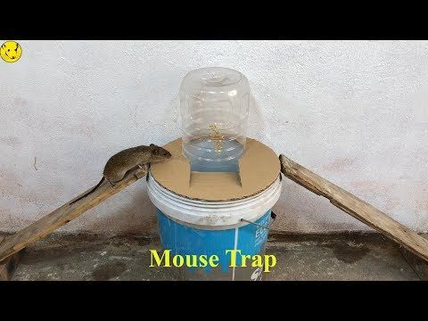 Best Mouse Trap/Easy Saving A Mice With Water Bottle Mouse