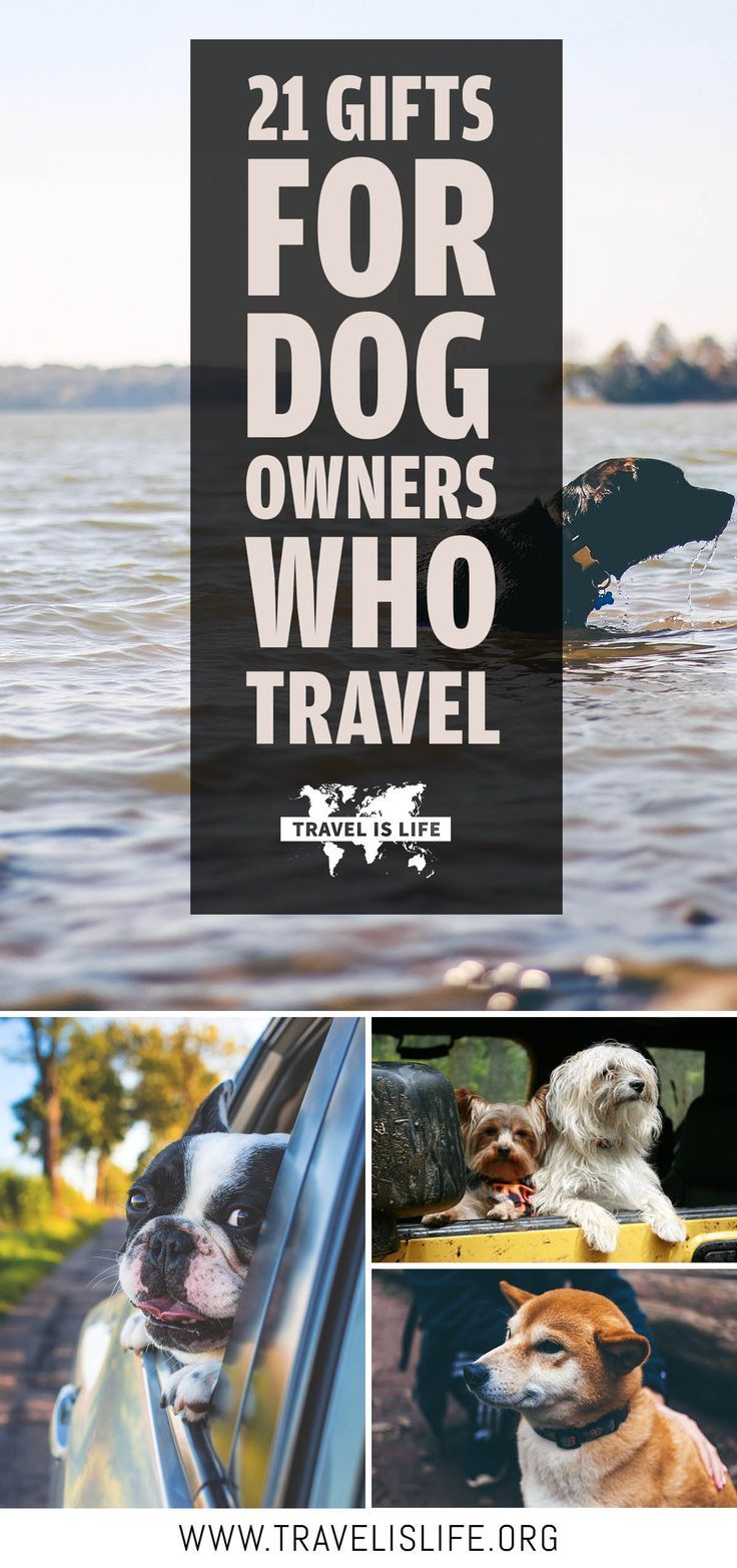 Travelers who own dogs have their own specific types of travel problems that are hard to understand unless you've got a pet of your own. Here are a few ideas for gifts that will make their lives a little easier. | Gifts For Dog Owners | Traveling With Dogs | Travel Dogs | Dogs Who Travel | Dogs Travel Too | Gifts For Traveling Pet Owners | Dog Travel Gear | Dog Travel Accessories