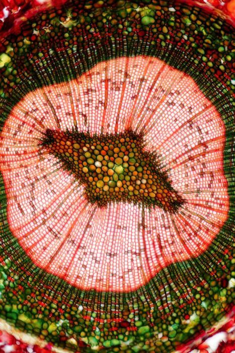 More of Eckhard Volcker's microphotography.