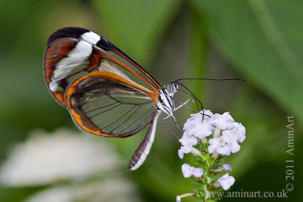 Butterfly World Project - Photography Workshops
