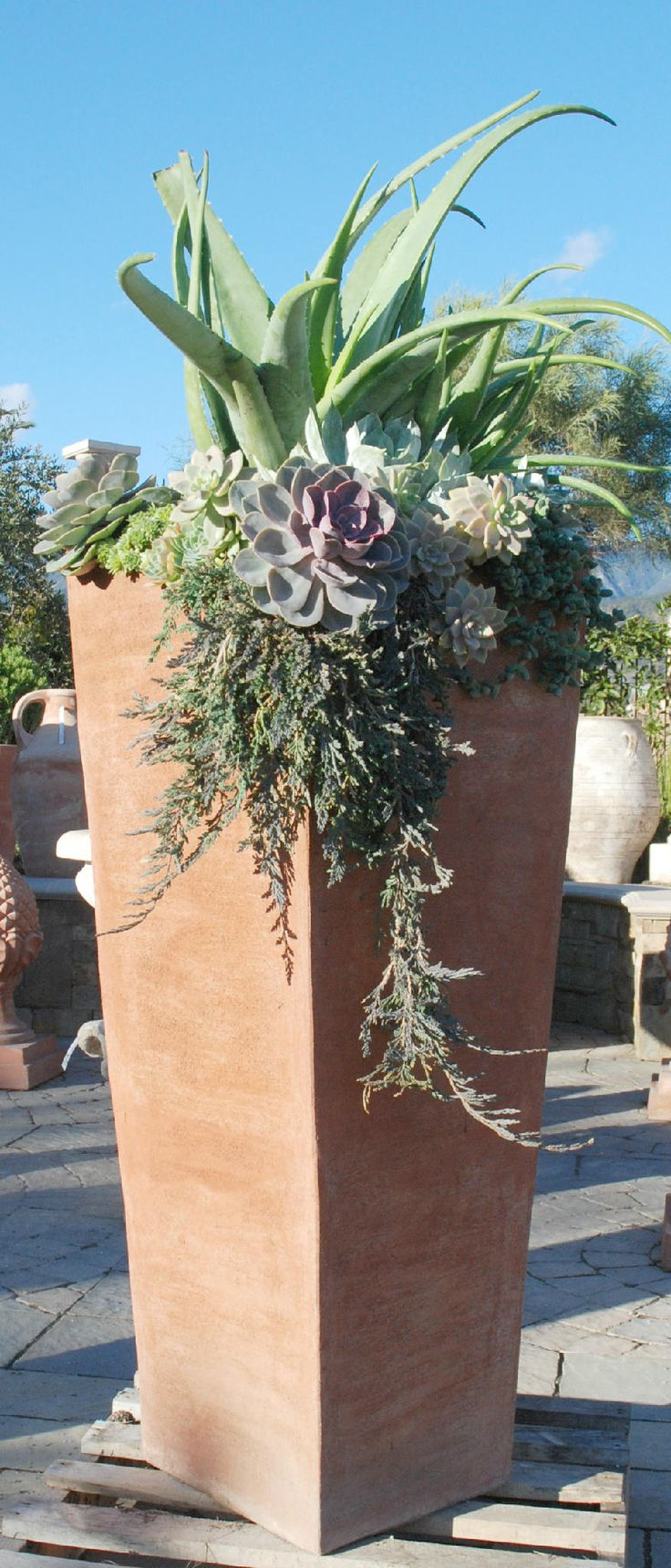 Twitter / EyeoftheDay: A combination of aloe, succulents ...