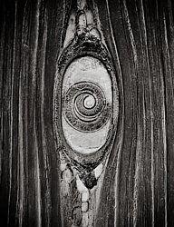 Carl (Heinrich Jakob) Strüwe, Urbild des Schmarotzertums (Trichinella spiralis) im Muskelfleisch, 1928. Vintage, Silbergelatineabzug. 23,2 x 17,8 cm (25,4 x 19,7 cm).