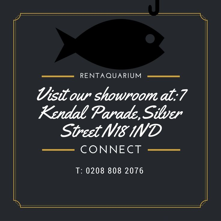 Professional experts in the company will maintain the aquariums for the customers. We serve North London and its surrounding areas. http://rentaquarium.co.uk/ #RentAquarium, #RentanAquarium, #AquariumLondon, #LondonAquarium, #London