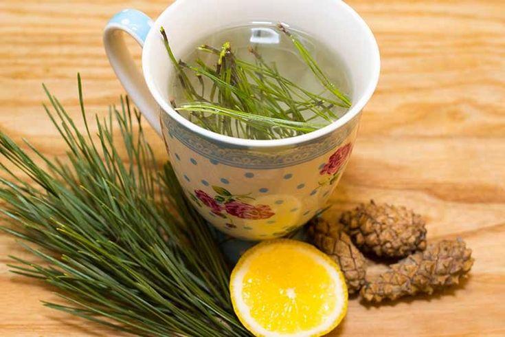 Herbatka witaminowa z igieł sosnowych
