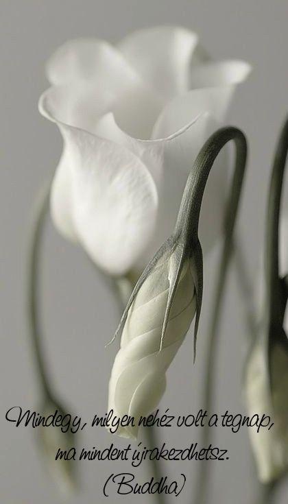 Fotó: Pinterest