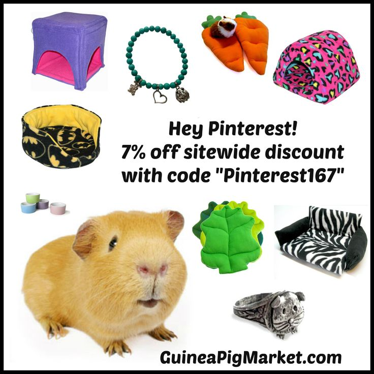 7% off for Pinterest users! www.guineapigmarket.com