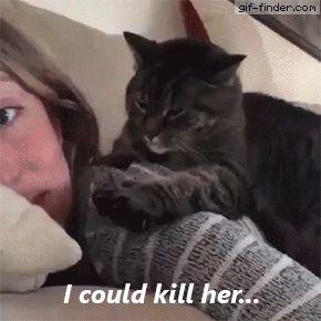 Ich könnte sie töten Gif Finder – Finde und teile lustige animierte Gifs  – cat's