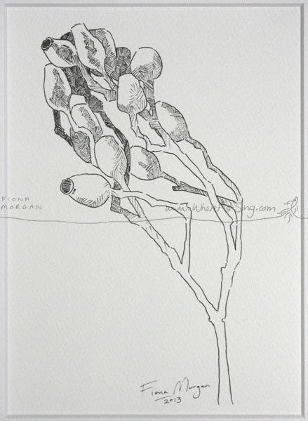 GUMNUTS Nature Illustration ORIGINAL Matted by WhereFishSing, $32.00