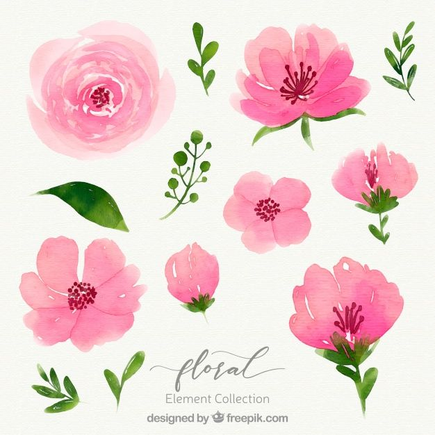 Download Watercolor Floral Element Collection For Free In 2020