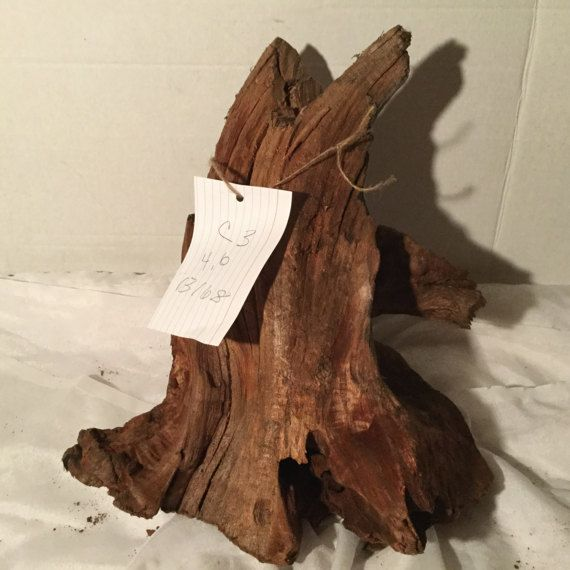 Cedar Aquarium Driftwood for Sale 13x16x8        by DriftwoodDruid