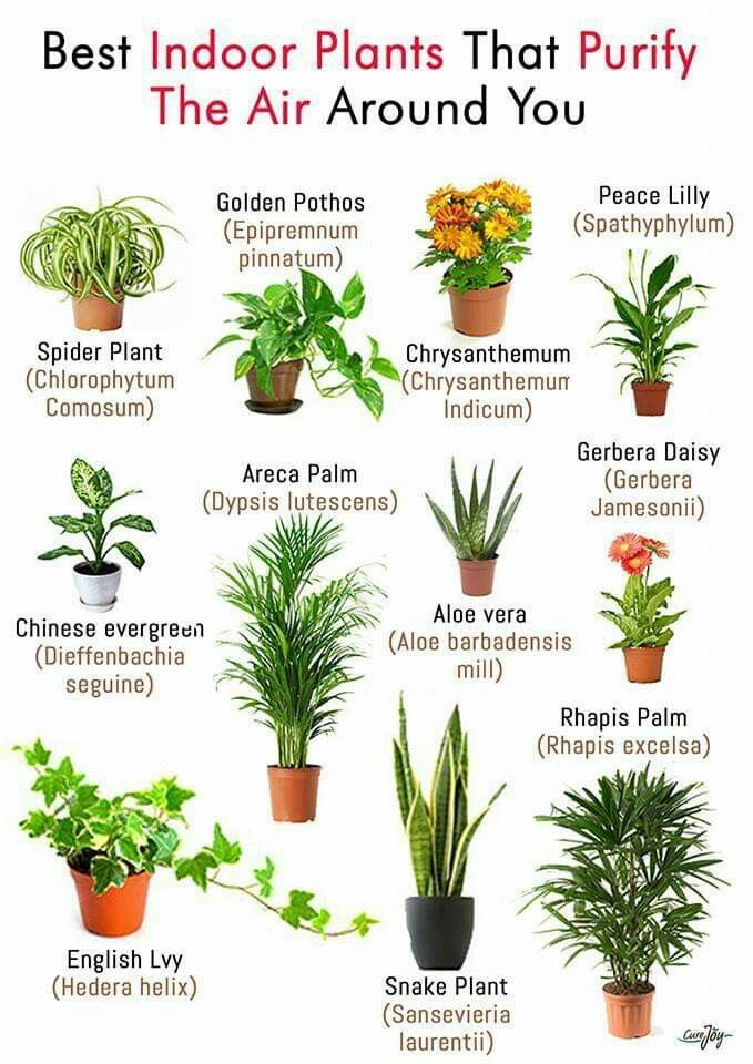 Best Indoor Plants This Is A Guideline For Watering Not