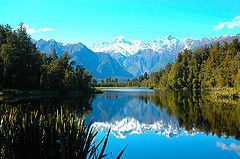 Haast to Hokitika - Rain Forests