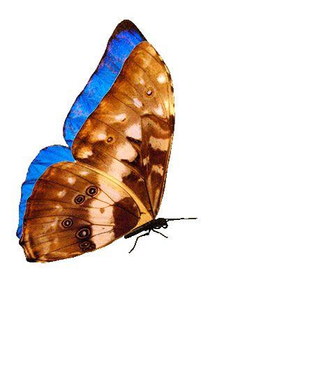 Анимационные картинки бабочки летают на прозрачном фоне, картинки приятных выходных