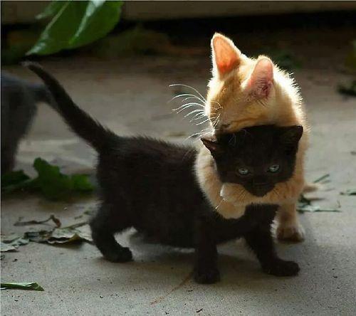 Interracial cat hug ... Awwwhhhhh!!!