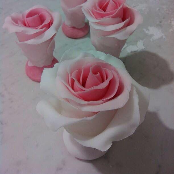Rosa pdz