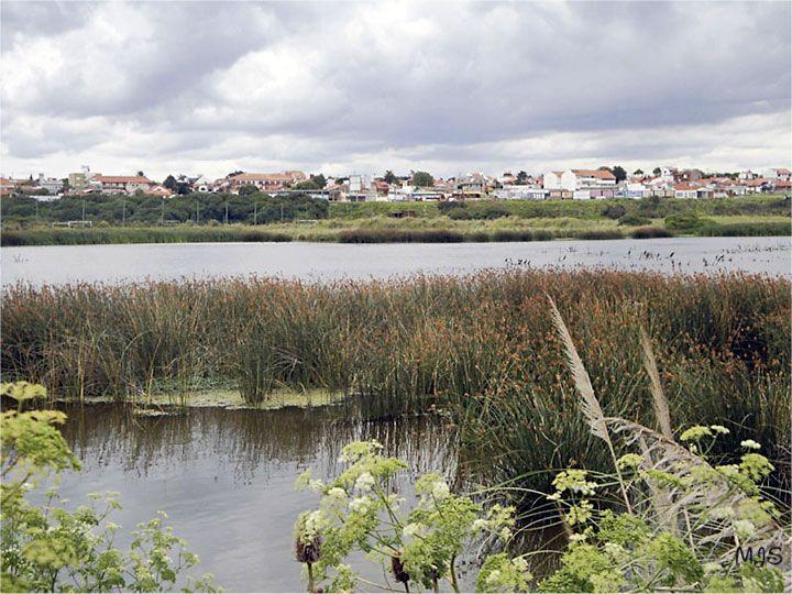 Vista de la Reserva Natural Puerto Mar del Plata, Buenos Aires. Foto: María José Solís