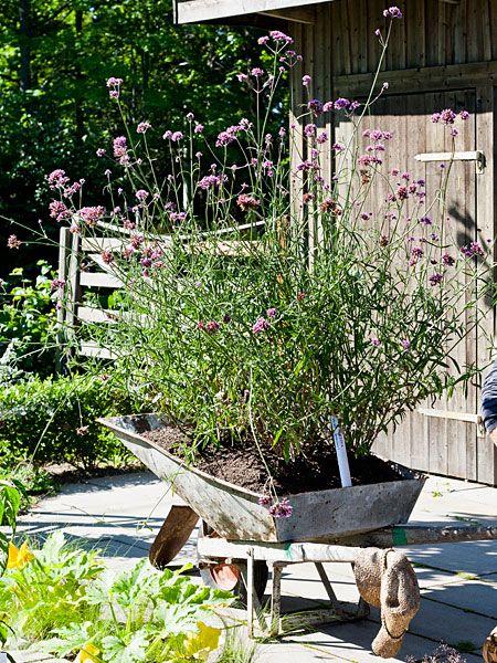 Trädgård | Living by H