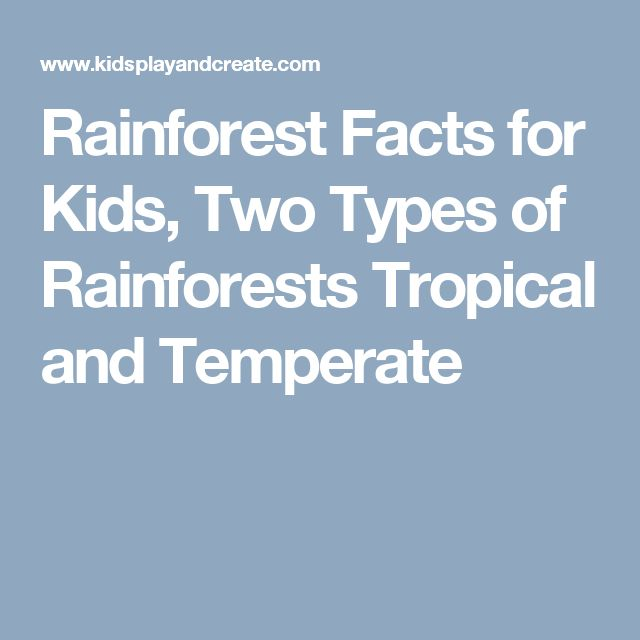 Rainforest Facts for Kids, Two Types of Rainforests Tropical and Temperate