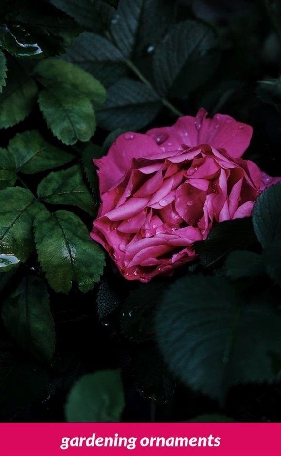 Gardening Ornaments 594 20180915180846 53 Sims 4 Ps4 Gardening For - gardening ornaments 594 20180915180846 53 sims 4 ps4 gardening for dummies top 10 gardening blogs zone
