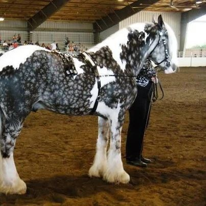 : Show Off, Pattern, Beautiful Hors, Color, Silver, Snowflakes, Gypsy Vanner Horses, Drafting Off, Animal