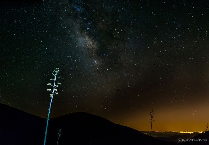 "Photo ""SpaceYucca"" by chrisflores"