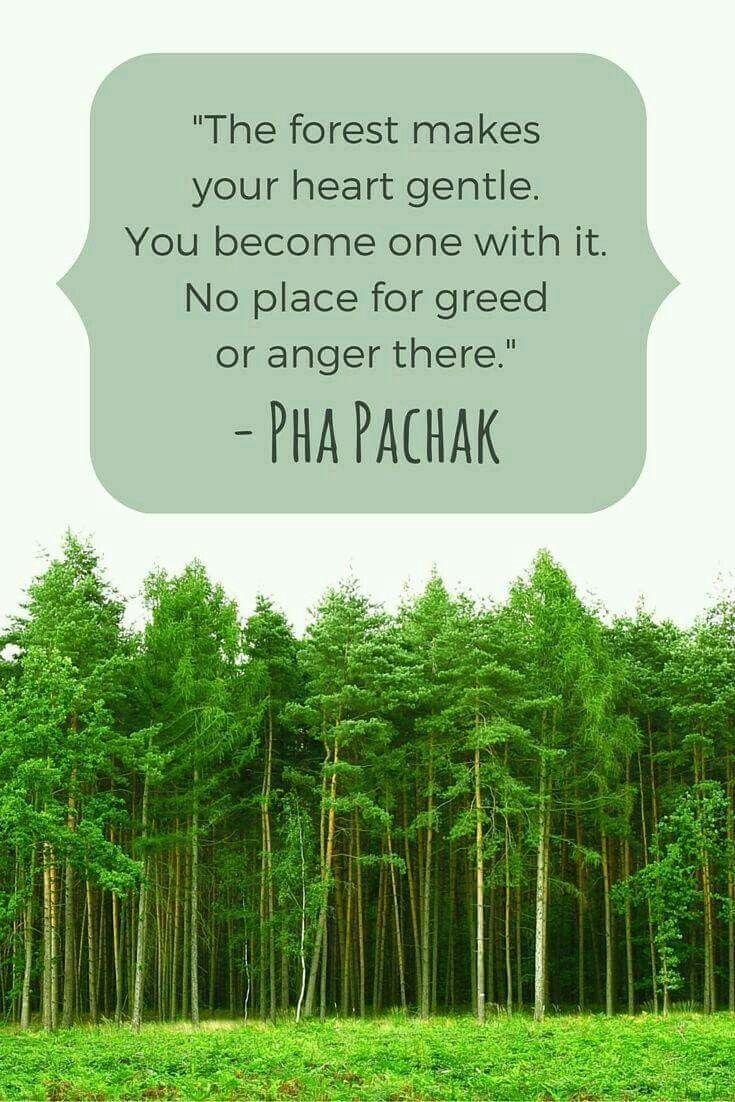 """""""La foresta rende il tuo cuore dolce, diventerai uno con esso, non c'è posto per l'avidità o la rabbia""""."""