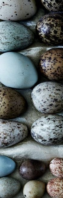 Speckled eggs! | Beautiful Things | Pinterest | Eggs