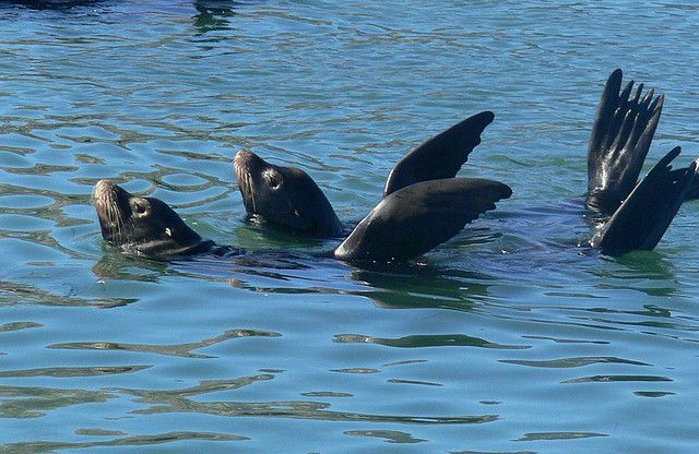Synchronized Swimming in the Animal Kingdom ~ The Ark In Space