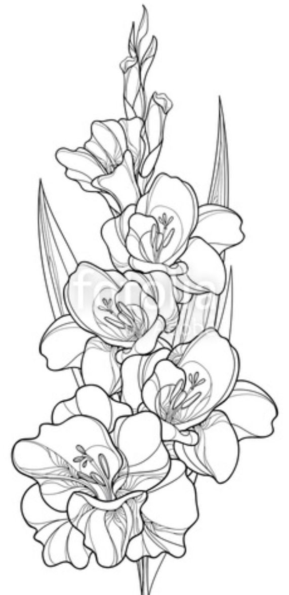 Gladiolus Tattoo Leg Not My Art Gladiolus Flower Tattoos Gladiolus Tattoo Flower Tattoo Drawings